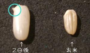 発芽玄米.jpg